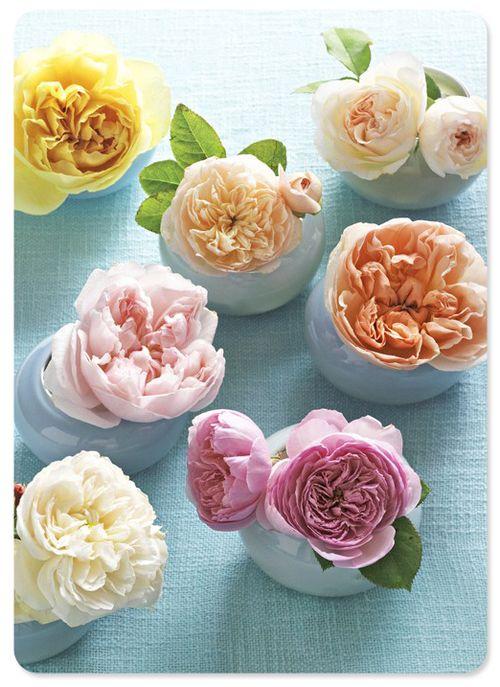 Blog - flowers2