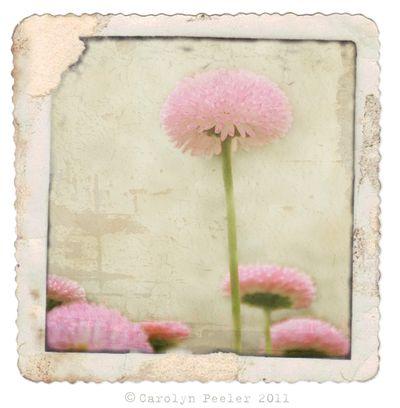 Pink Flower for blog